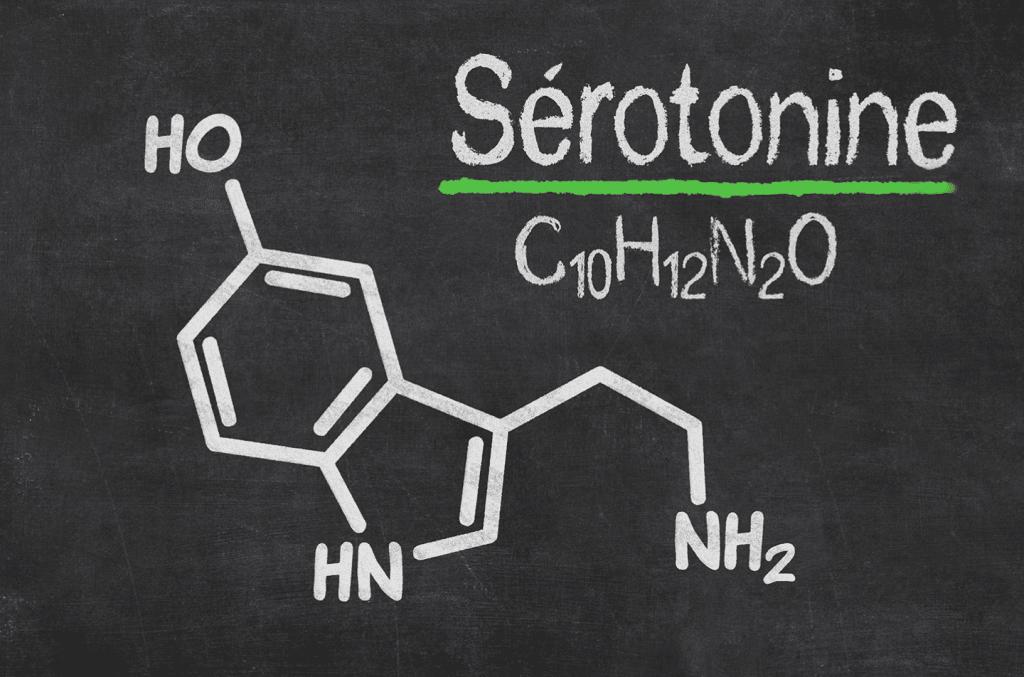 Comprendre la sérotonine